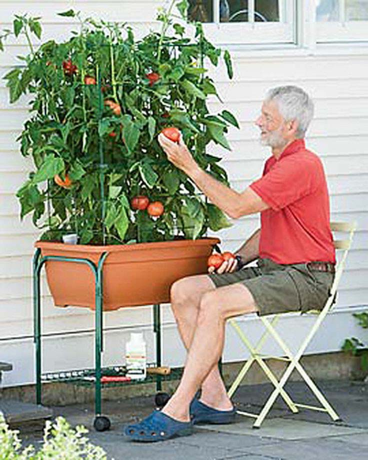 Patio Tomato Planter