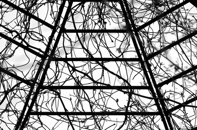 sky blackandwhite bw wisconsin contrast vines nikon flickr bright gazebo structure architectural growth buds stark sheboygan photostream 105mm wroughtirongazebo d7000 imageclear