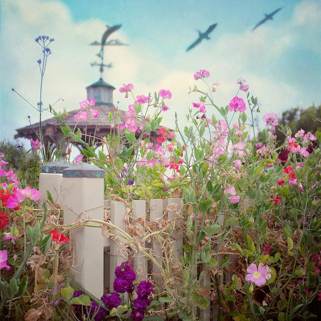 california flowers texture pelicans sandiego lajolla gazebo weathervane flypaper hff wishmeluck eightdaysaweek needtowinthelottery fencefriday pixelmama wishthiswasmyfence