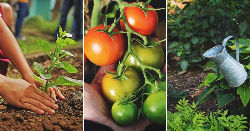 November Gardening Tips and To-do List by Planting Zone and Region